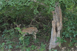 Jim Corbett: Nature's Treat