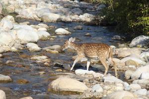 Jim Corbett: Nature's Treat