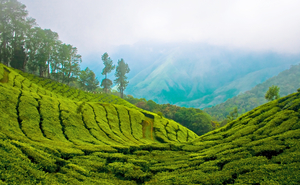 Vagamon to Kumily - The Unexplored Tea Route