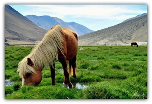Ladakh – Heavenly delight