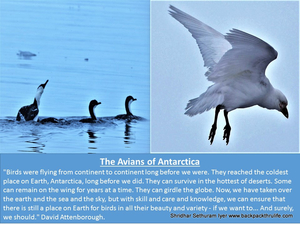 The Emperor Avians of Antarctica
