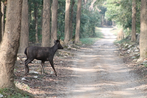 Exploring the Wilderness Jim Corbett National Park has to Offer | Trip Plan | Details