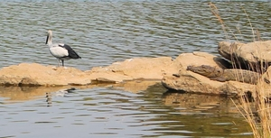 Ranganathittu Bird Sanctuary - Mysore - Karnataka