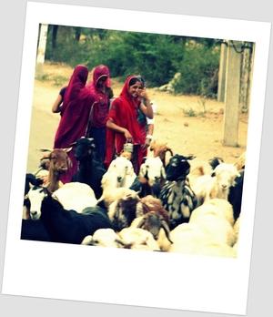Rajasthan Diaries.....