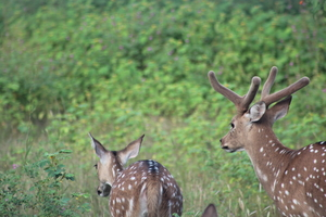 Wildlife tour across Gujarat