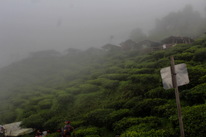 Nestled in the mountains: Darjeeling
