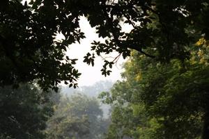 Betla National Park, Palamau, Jharkhand