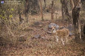 Khajuraho + Panna Tiger Safari