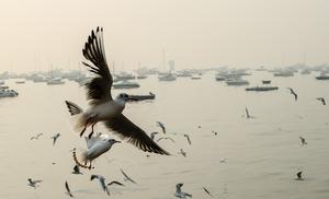 Chirpy mornings of Mumbai!