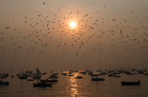 Chirpy mornings of Mumbai!