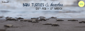 Velas Turtle Festival 28th Feb & 1st March - with Mapping Journey!