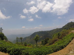 What I found on the other side of Nilgiris?