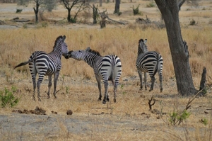 3days / 2 nights trip Tanzania
