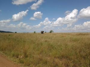 3 Days Budget Camping Samburu National Reserve Safari.