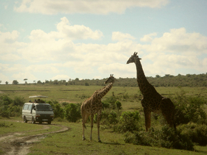 Amazing Kenya Wildlife Safaris