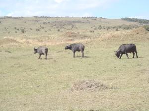 Amazing Kenya Wildlife Safaris