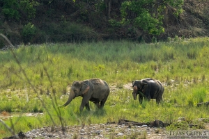Memorable Experience: Jim Corbett National Park