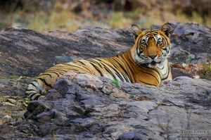 Trip to the Tiger abode: Ranthambore National Park