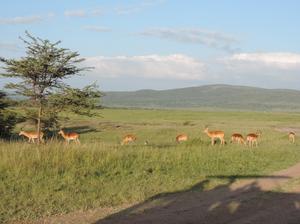 3 DAYS KENYA CAMPING ADVENTURE SAFARI CONTACT 0710798172