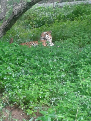 Road trip to safari – Bannerghatta Biological Park