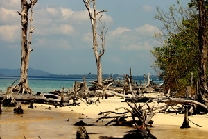 Amour Andamans