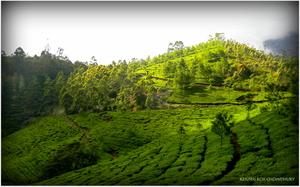 Kerala. Truly god's own country