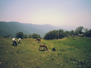 Getaway from Delhi: A Trek to Nagtibba