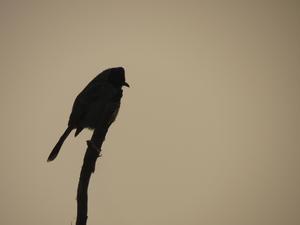 Weekend at Bharatpur Bird sanctuary