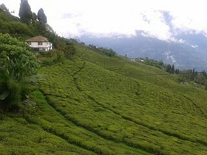 Ten reasons why Sikkim should be your next destination!