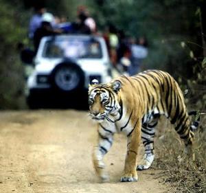 Arun Prakash Travel Blogger