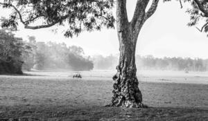 Chasing the wild in Kaziranga