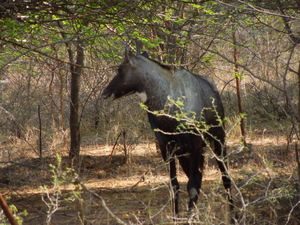 Wildlife of Ranthambore