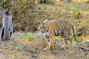 Weekend Trip To Tadoba Tiger Reserve