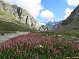 Hamta Pass trek manali himachal pardesh