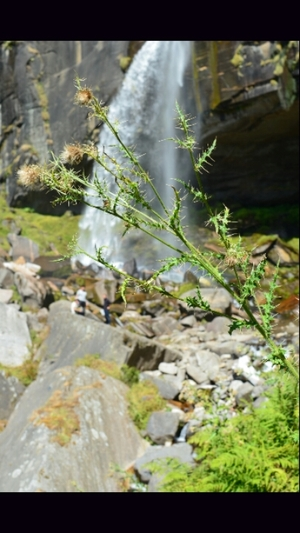 Unforgettable Himachal – 1