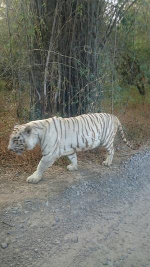Bannerghatta National Park, Bengaluru