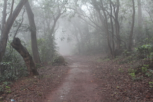 Matheran: Where nobody honks!