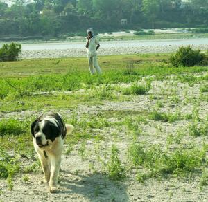 Homestay (pahadihouse) - Rishikesh, Uttrakhand