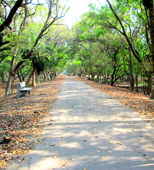 Inside the Bharatpur Bird Sanctuary