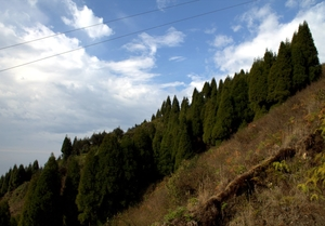 A walk through Singlila Ridge - Sandakphu and Phalut trekking