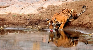 Ranthambore Weekend (Always my favorite)