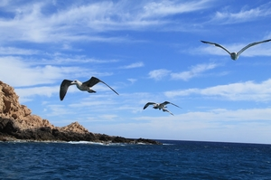 By the Blue Waters of Los Cabos