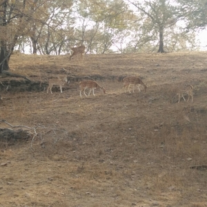 Ranthambore - date with the tiger