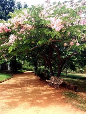 Auroville – Live a little