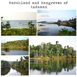 Prize of patience : Andaman Islands