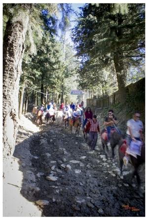 Mashobra - Shimla diaries