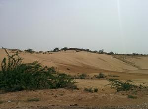 Golden Desert in Osian