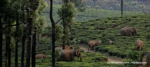 Sinna Dorai, Valparai, Wildlife Photography