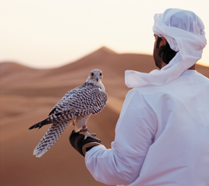 Insider's Guide to Abu Dhabi from a Local's Perspective