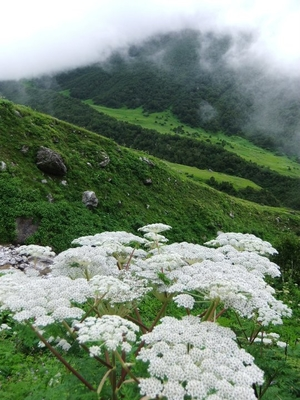 Valley of Flowers, India